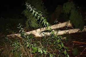 Trädet blixten slog ner i 1