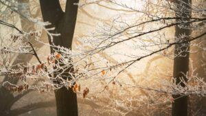 Vinter Hemmesta